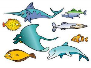 scubafishes002